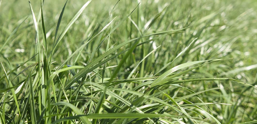 Forage Mixes Available from La Crosse Seed